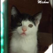 MICHOU - M - Né le 20/04/2016 - Adopté en août 2016