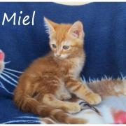 MIEL - M - Né le 25/04/2016 - Adopté en juillet 2016