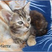 MIETTE - F - Née le 25/04/2016 - Adoptée en juillet 2016