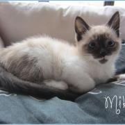 MIKA - F - Née le 25/10/2015 - Adoptée en janvier 2016
