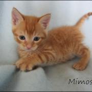 MIMOSA - M - Né le 26/03/2016 - Adopté en juin 2016