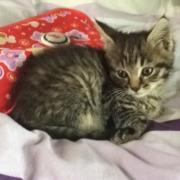 MINA - F - Née le 20/03/2016 - Adoptée en juillet 2016