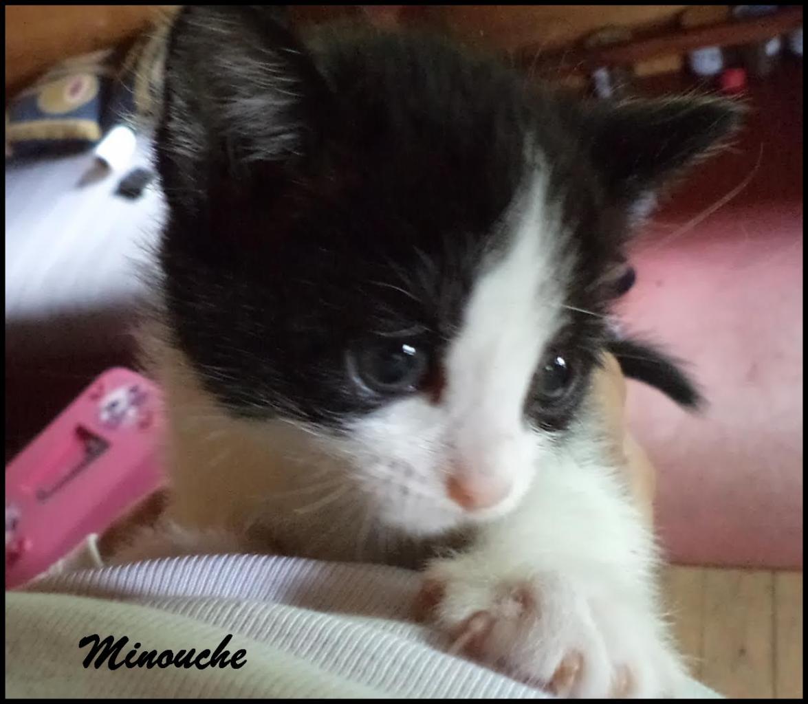 MINOUCHE - F - Née le 20/04/2016 - Adoptée en août 2016