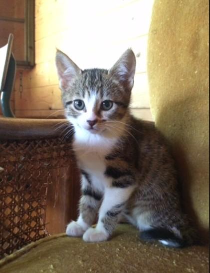 MIRZA - F - Née le 7/04/2016 - Adoptée en juillet 2016