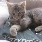 MISTY - F - Née le 25/10/2015 - Adoptée en janvier 2016
