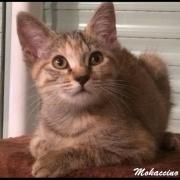 MOKACCINO - F - Née le 20/05/2016 - Adoptée en Février 2017