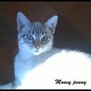 MONEY PENNY - F - Née le 02/06/2016 - Adoptée en Février 2017
