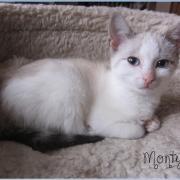 MONTY - M - Né le 25/10/2015 - Adopté en janvier 2016