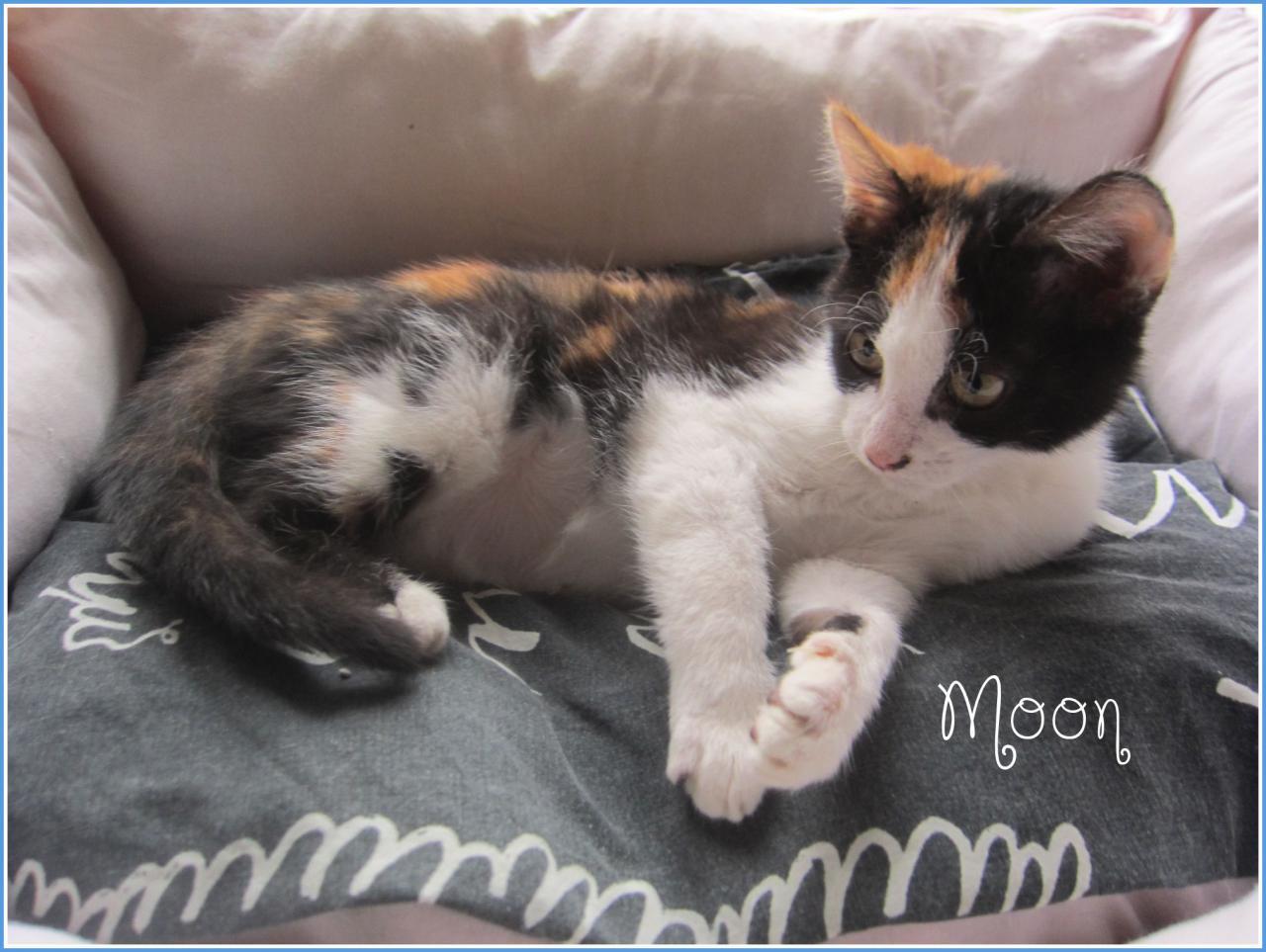 MOON - F - Née le 25/10/2015 - Adoptée en janvier 2016