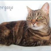MORGANE - F - Née le 01/07/2010 - Adoptée en avril 2016