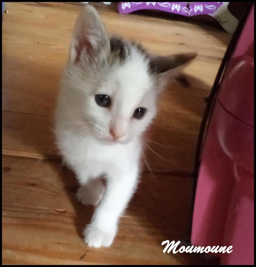 MOUMOUNE - F - Née le 20/04/2016 - Adoptée en juillet 2016