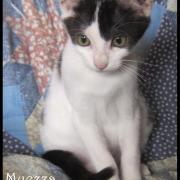 MUEZZA - F - Née le 01/07/2016 - Adoptée en Octobre 2016