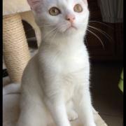 MYRIADE - F - Née le 20/03/2016 - Adoptée en Septembre 2016