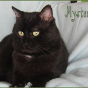 MYSTERY - M - Né en Avril 2016 - Adopté en Juillet 2017