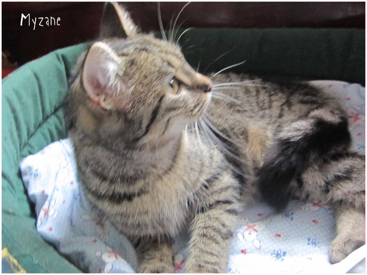 MYZANE - F - Née le 01/01/2015 - Adoptée en mars 2016