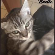 Naelle - F - Née le 25/05/2017, adoptée en septembre 2017