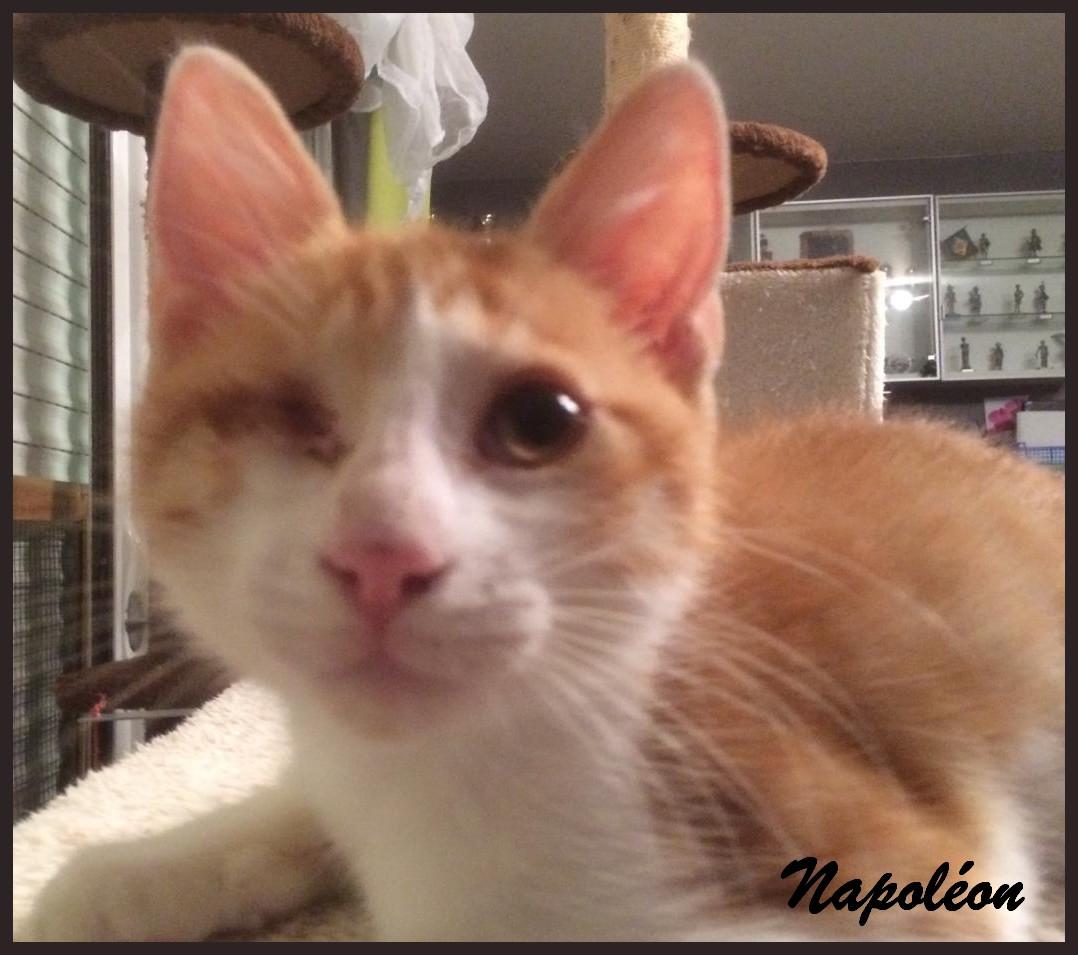 NAPOLEON - M - Né le 03/05/2017 - Adopté en Octobre 2017