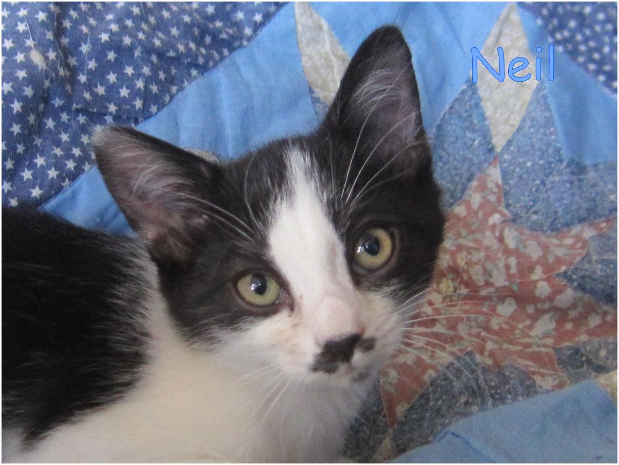 NEIL - M - Né le 7/8/2017 - Adopté en janvier 2018
