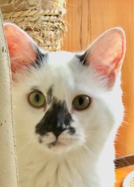 Néroli - M - Né le 15/07/2017 - Adopté en novembre 2018