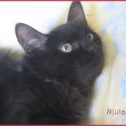 Njuta - F - Née le 17/05/2017 - Adoptée en décembre 2017