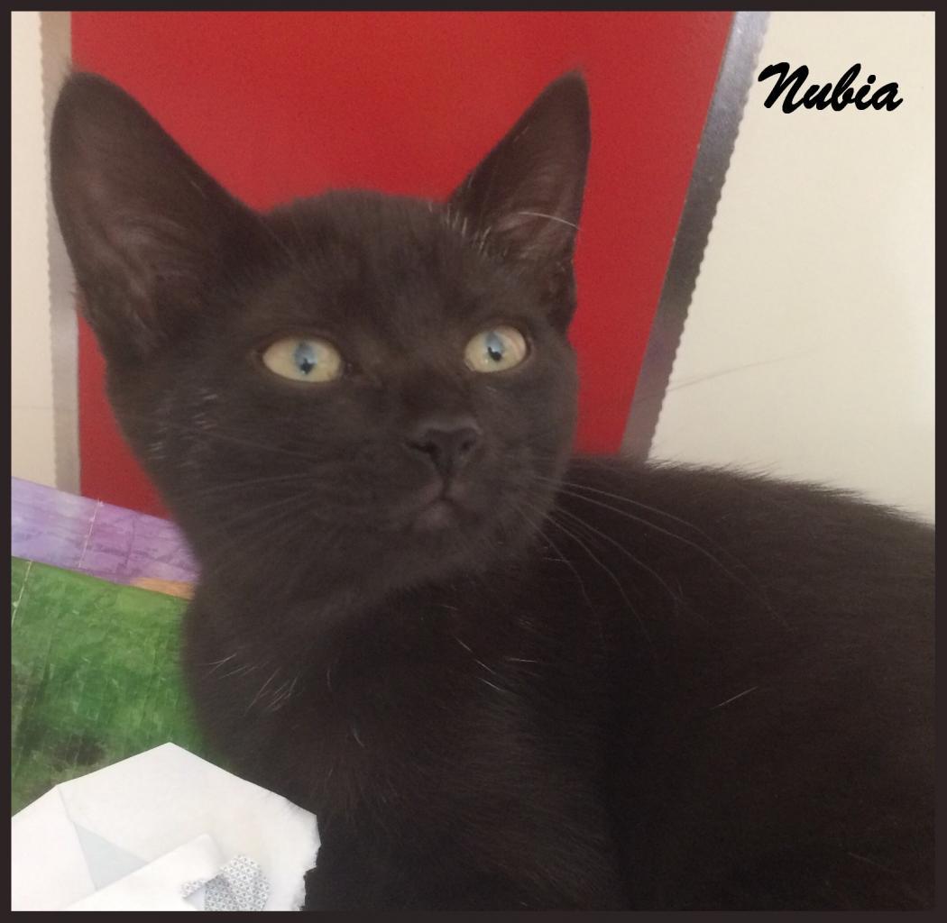 NUBIA - F - Née le 20/05/2017 - Adoptée en Septembre 2017