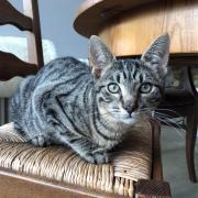 Oclock -M - Né le 1/8/2018 - Adopté en décembre 2018