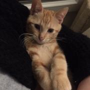 Octave - M - Né le 5/8/2018 - Adopté en décembre 2018
