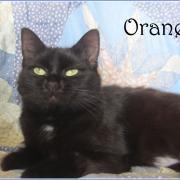 Orane - F - Née le 1/11/2017 - Adoptée en octobre 2018