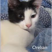 Orelsan - M - Né le 1/5/2018 - Adopté en octobre 2018