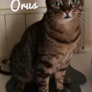 Orus - M - Né le 08/04/2018 - Adopté en juin 2020