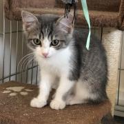 Ouistiti - F - Née le 8/5/2018 - Adoptée en octobre 2018