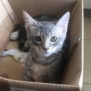 Ouste - M - Né le 13/03/2018 - Adopté en novembre 2018