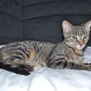 JASMIN - M - Né le 01/07/2014 - Adopté en janvier 2015