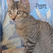 Pam - F - Née le 1/7/2019 - Adoptée en dec 2019