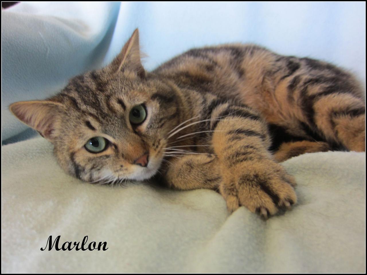 MARLON - M - Né le 01/05/2015 - Adopté en juillet 2016