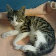 GAMINE  - F - Née le 25/05/2011 - Adoptée en Septembre 2011