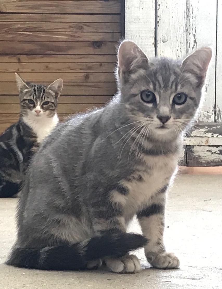 Picoti - M - Né le 1/8/2019 - Adopté en novembre 2019