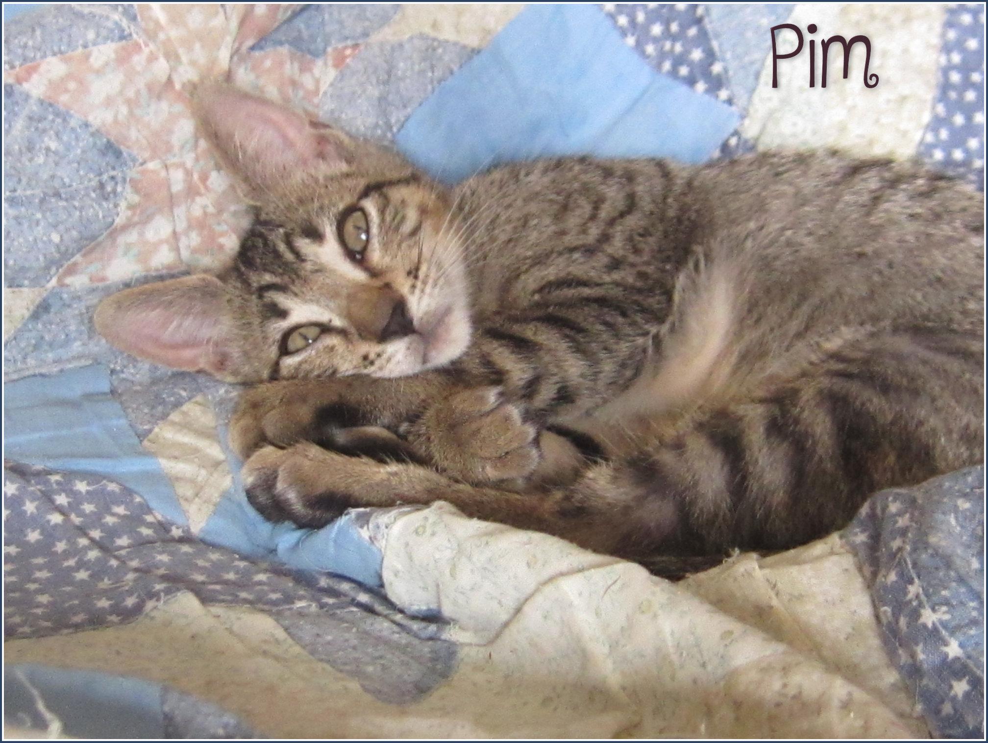 Pim - M - Né le 1/7/2019 - Adopté en dec 2019