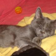 Pirate - Adopté en janvier 2012