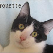 Pirouette - M - né le 15/08/2019 - Adopté en janvier 2021