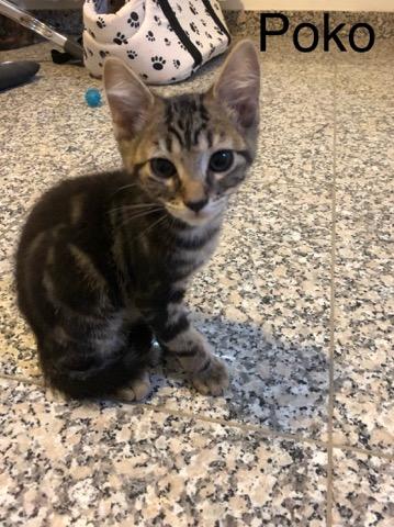 Poko - M - Né le 1/4/2019 - Adopté en sept 2019