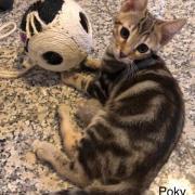 Poky - M - Né le 1/4/2019 - Adopté en février 2020