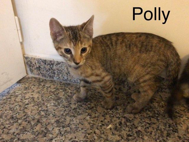 Polly - F - Née le 1/4/2019 - Adoptée en sept 2019
