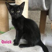 Quick - F - Née le 15/04/2020 - Adoptée en août 2020
