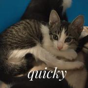 Quicky - F - Née le 10/06/2020 - Adoptée en septembre 2020