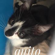 Quito - M - Né le 10/06/2020 - Adopté en septembre 2020