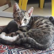Ragnar - M - Né le 01/05/2020 - Adopté en septembre 2020
