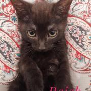 Rajah - M - Né le 26/04/2020 - Adopté en septembre 2020