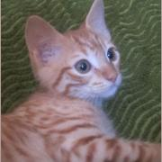 Rajess- M - Né le 01/04/2020 - Adopté en août 2020