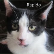 Rapido - M - Né le 01/06/2020 - Adopté en septembre 2020